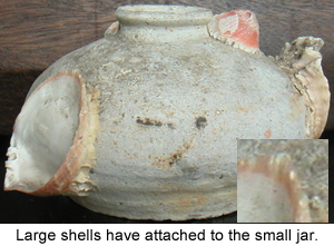 Typical shell encrustations on a small Chinese Porcelain Jar