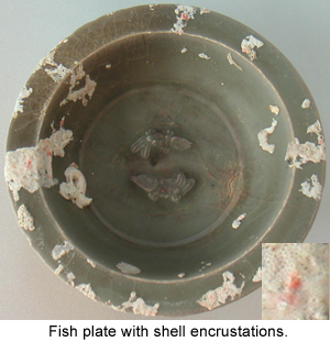 Typical shell encrustations on a Chinese Celadon Dish